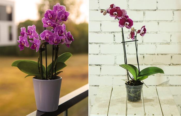 Orkide saksısı nasıl olmalı